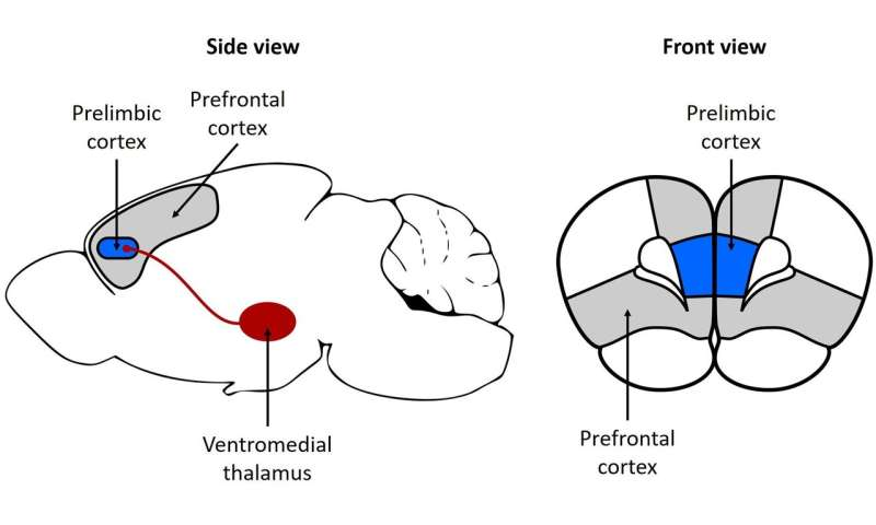 Mapping the decision-making pathways in the brain