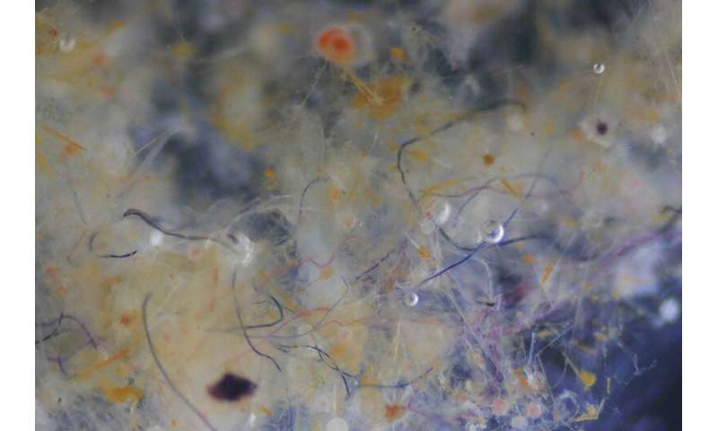 Marine microfibres: less plastic than predicted