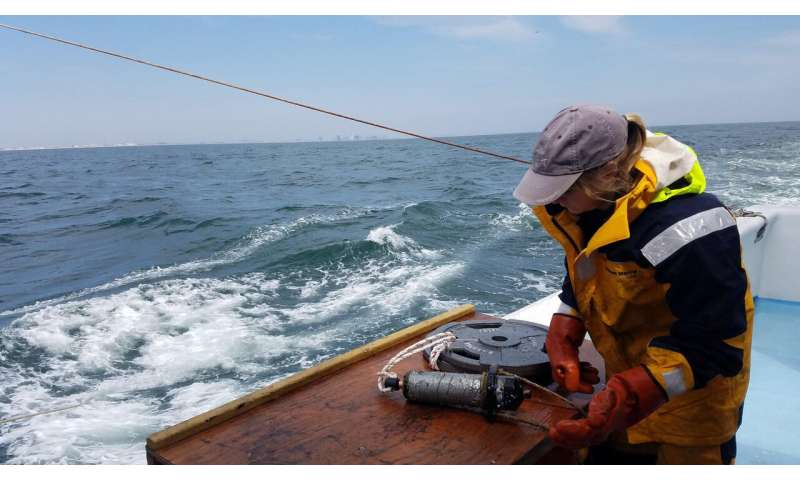 Maryland offshore wind farm could become stop-over for migrating sturgeon, striped bass