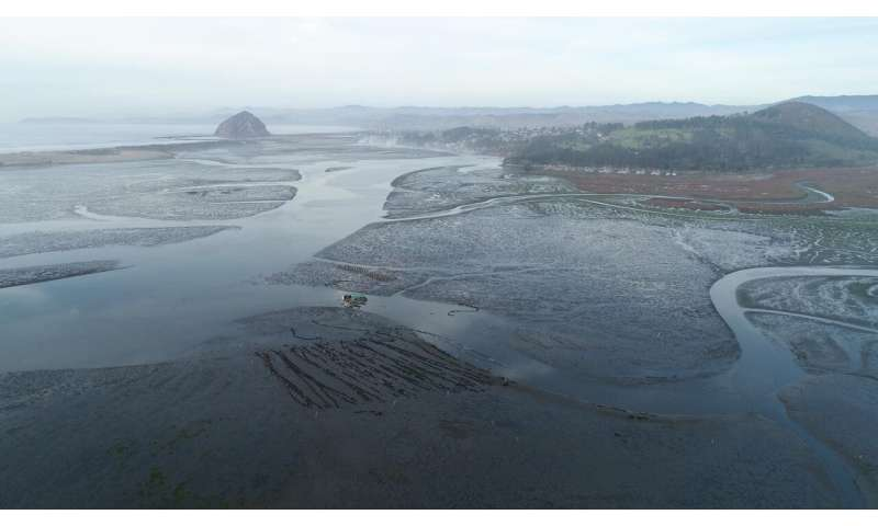 Massive seagrass die-off leads to widespread erosion in a California estuary