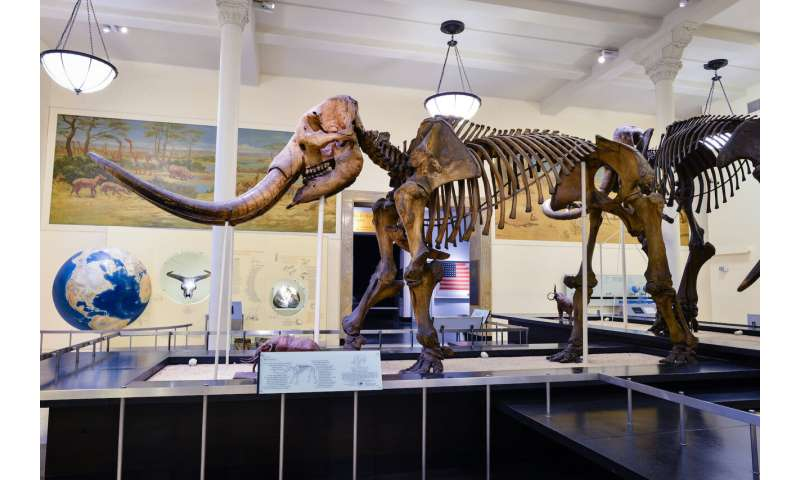 Mastodons took frequent trips north when climate changed