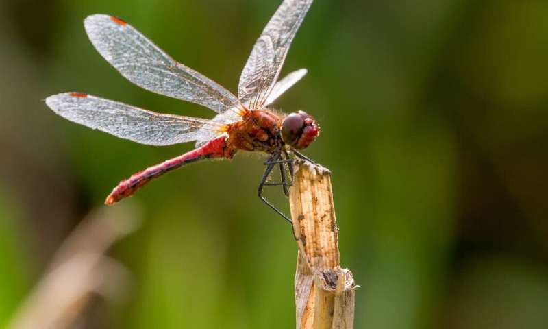 Meet the insects that are defying the plunge in biodiversity – new findings