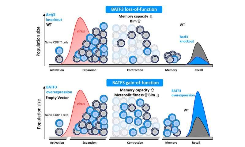 Memory training for the immune system