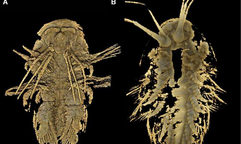 MicroCT reveals detailed head morphology of arthropod, Leanchoilia illecebrosa
