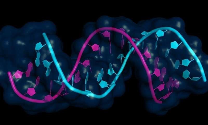 MicroRNAs: the 'junk' genetic material with huge potential to fight cancer and dementia