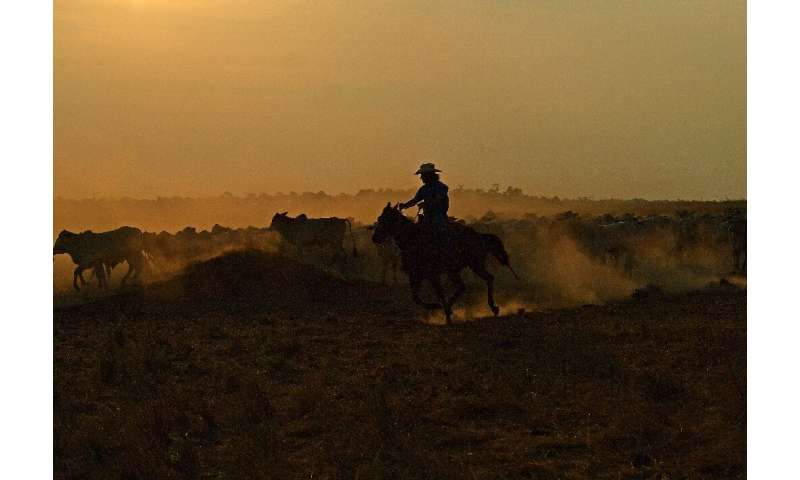 Millions of hectares of already deforested land in Brazil's Mato Grosso state being used to pasture livestock could be converted
