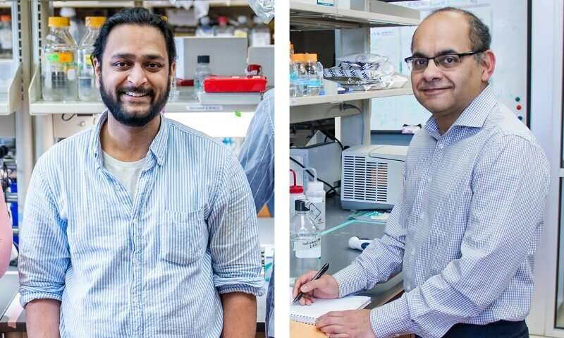 Molecular cause underlying rare genetic disorder revealed