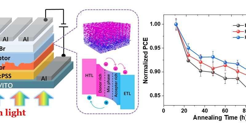 Molecular dispersion enhances quasi-bilayer organic solar cells