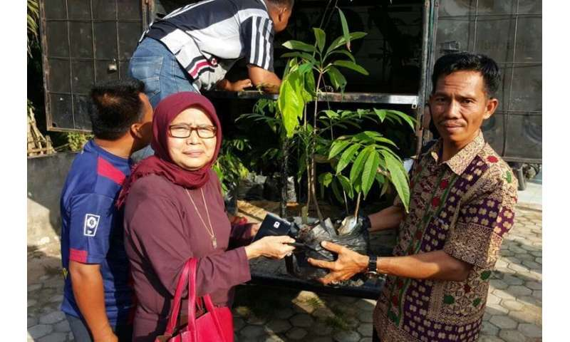 More diversity needed in oil palm plantations