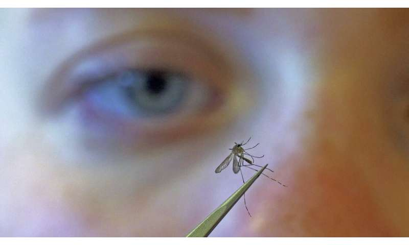 Mosquitoes flying free as health departments focus on virus