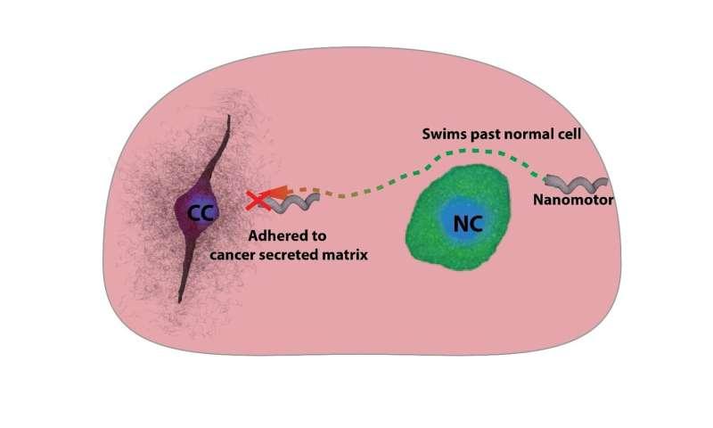 Nanomotors as probes to sense cancer environment