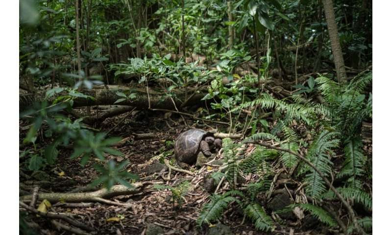 Nearly half of the Seychelles 455 square kilometres (176 square miles) are classed as protected areas