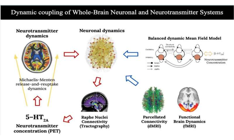 Neuronal and neurotransmitter systems dynamic coupling explains the effects of psilocybin