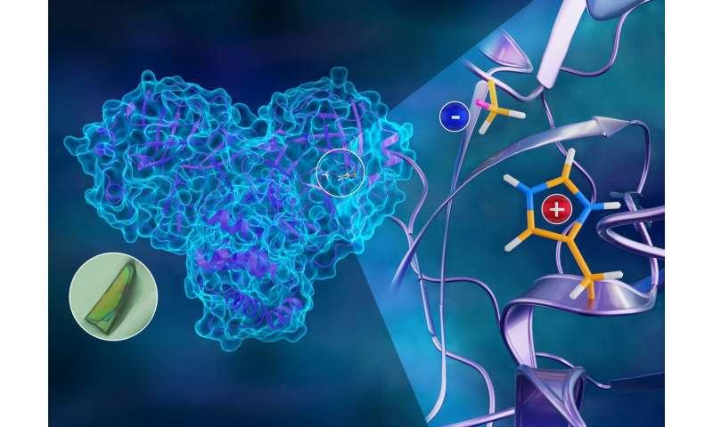 Neutrons chart atomic map of COVID-19's viral replication mechanism
