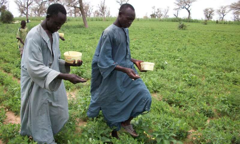 New aflatoxin biocontrol product lowers contamination of groundnut and maize in Senegal