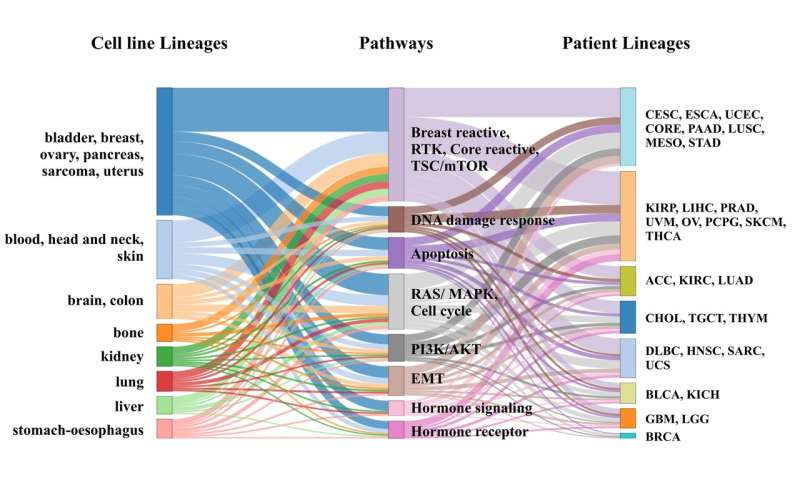 New analytic tool designed to help guide precision oncology discovery and treatments