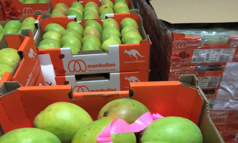 New blockchain tech key to cost savings for Northern mango producer