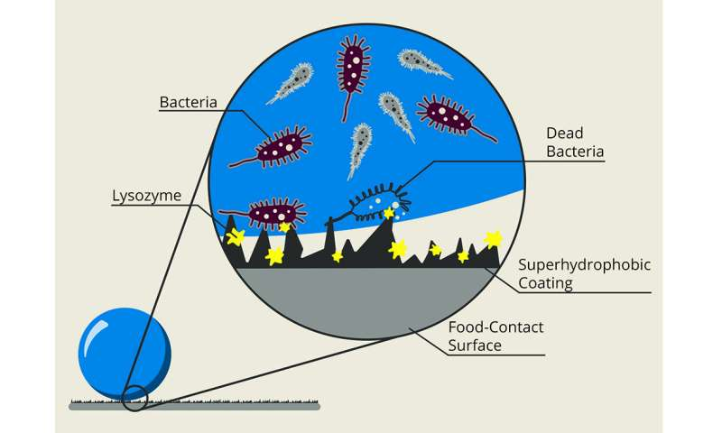 New dual-action coating keeps bacteria from cross-contaminating fresh produce