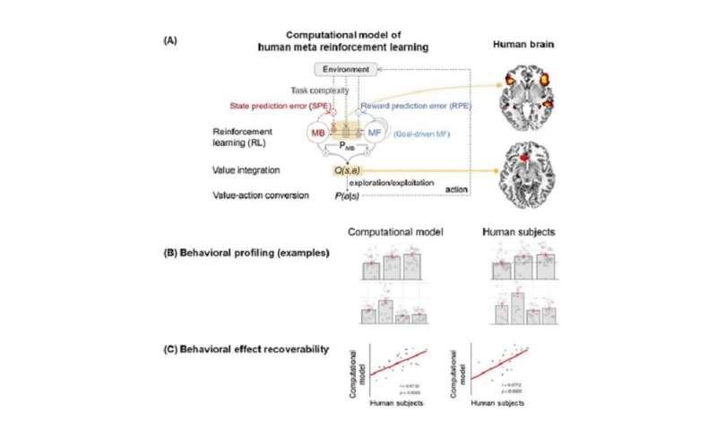 New insights into how the human brain solves complex decision-making problems