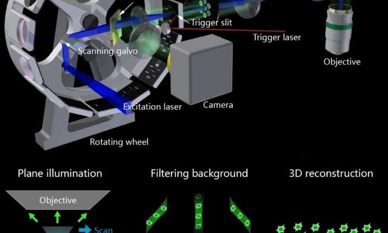 New method captures neural and vascular dynamics at high spatiotemporal resolution deep in brain
