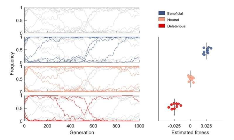 New method identifies adaptive mutations in complex evolving populations