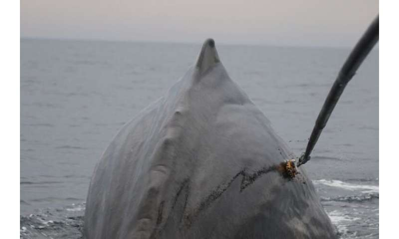 New sonar still deters sperm whales feeding