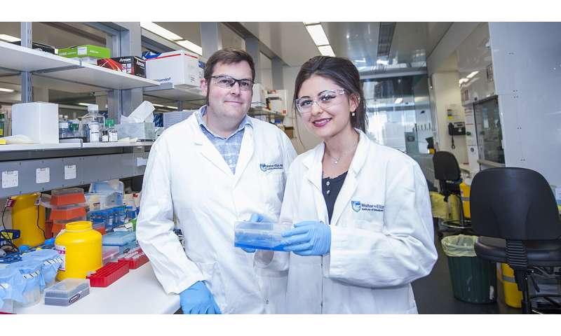 New structural 'map' solves mysteries of gigantic gene regulator