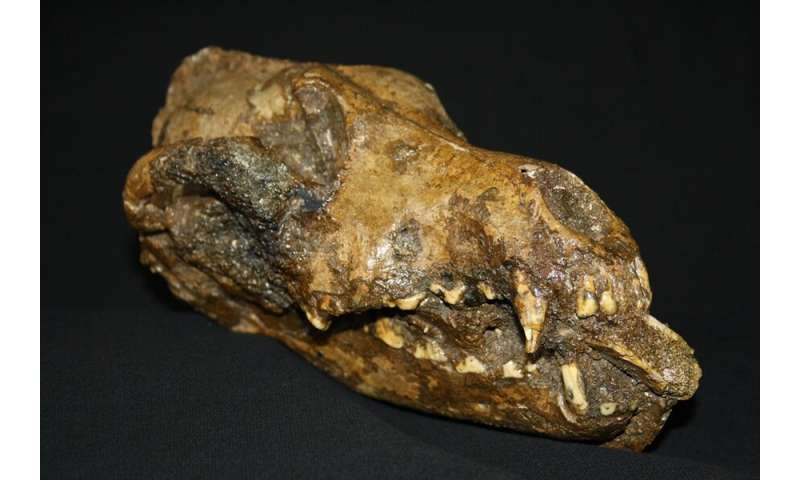 New study results consistent with dog domestication during Ice Age