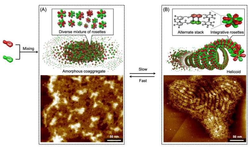 New supramolecular copolymers driven by self-sorting of molecules