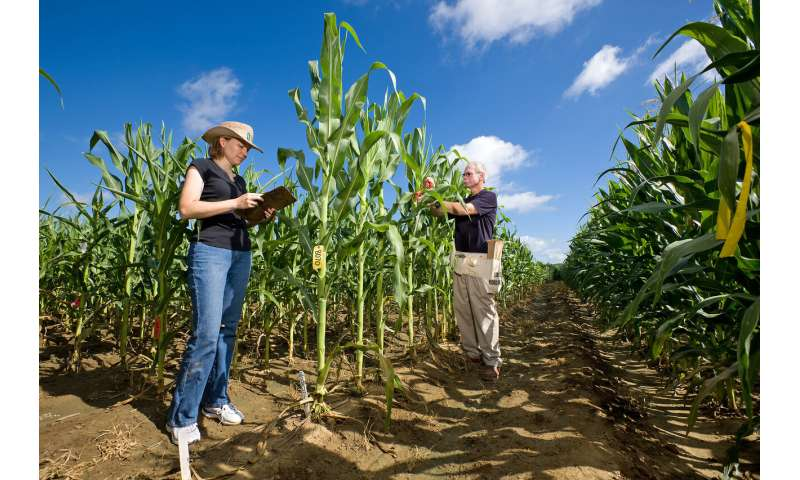 New tool could help scientists dig deeper for prized crop genes
