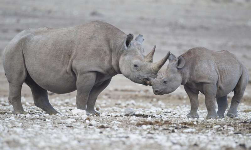 New tracking technology will help fight rhino poaching in Namibia