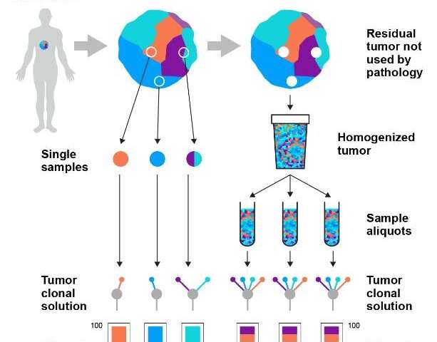 New tumour sampling method significantly improves genetic testing for cancer treatment
