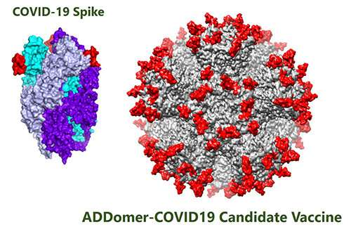 New vaccine platform used to develop COVID-19 candidates