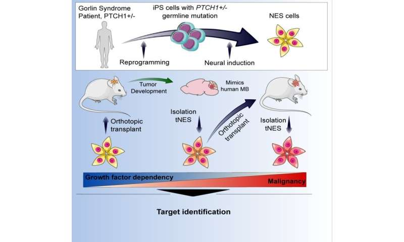 New ways to study how cancer arises