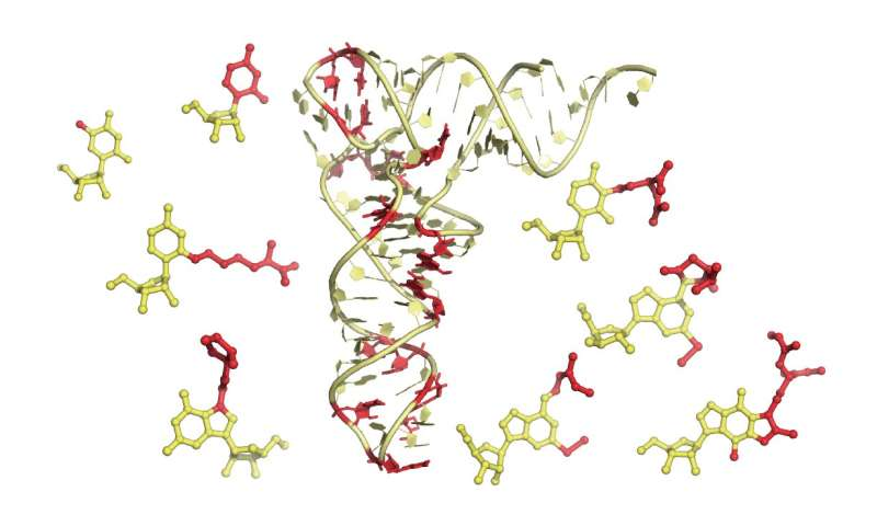 New way to see RNA could help fight pathogens