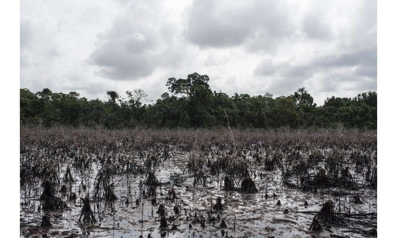 Nigerian communities struggle with devastating oil spills