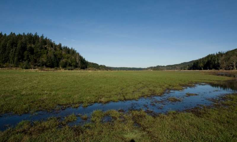 NOAA finds new liquified natural gas pipeline in Oregon will not jeopardize speciesJanuary 10, 2020