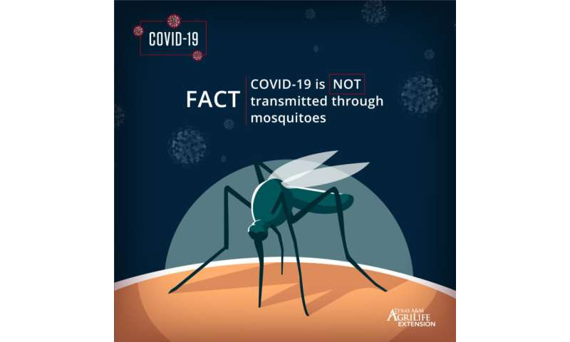 No scientific evidence that COVID-19 is transmitted by mosquitoes and ticks