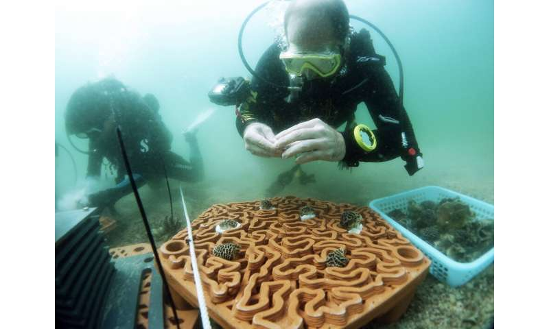 Novel 3-D printed 'reef tiles' to repopulate coral communities