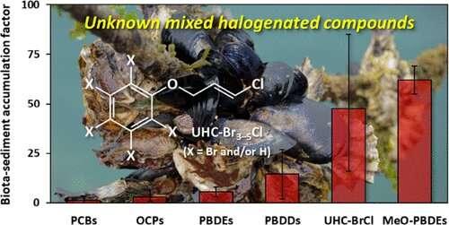 Novel bioaccumulative compounds found in marine bivalves