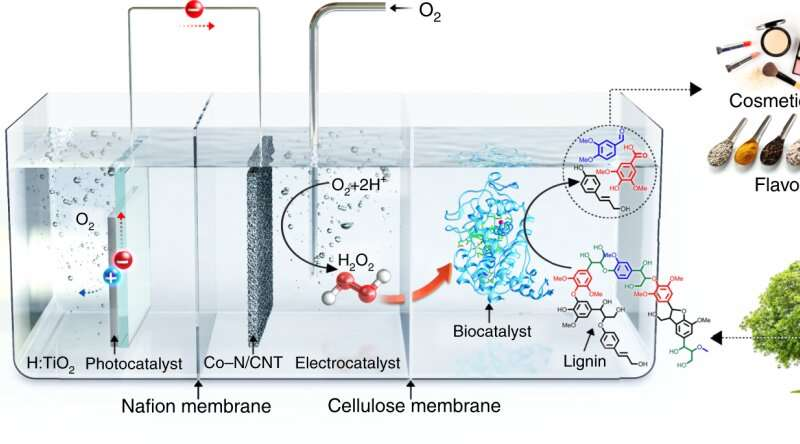 Novel biocatalytic system turns waste biomass into value-added chemicals