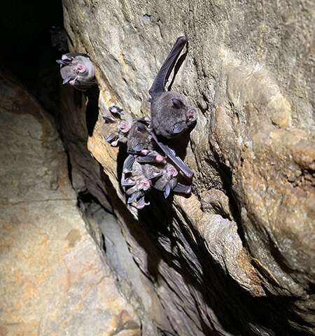 Novel Species of Fungi Discovered on Bat Carcasses in the Limestone Caves of Southwest China