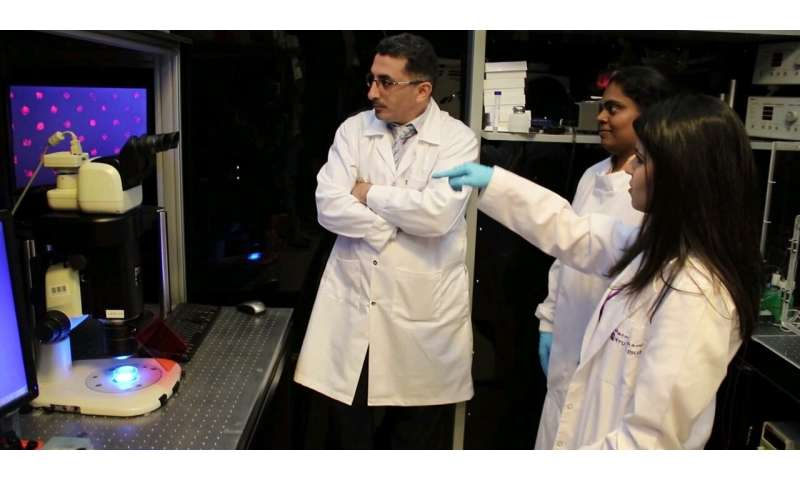 NYUAD researchers develop new approach to more efficiently store and preserve human cells