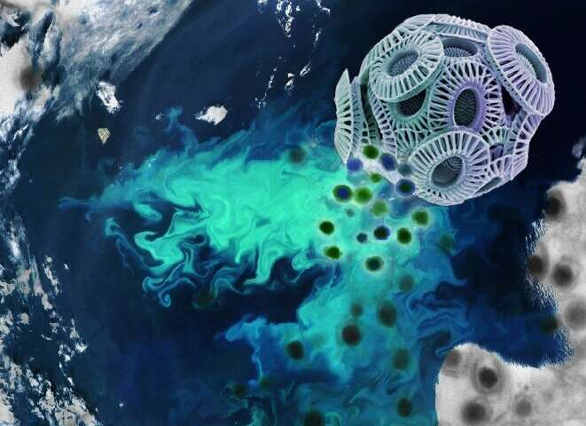Ocean algae get 'coup de grace' from viruses