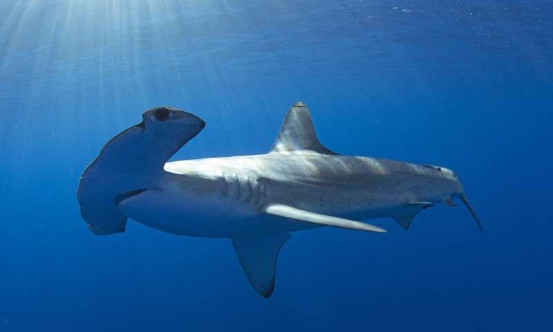 Ocean heatwaves dramatically shift habitats