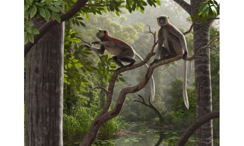 Oldest monkey fossils outside of Africa found