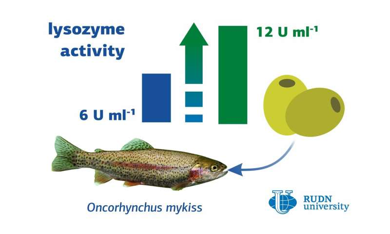 Olive Boosts the Immunity of Trout, Says a Biologist from RUDN University