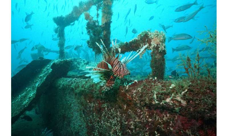 Open sores, lower numbers likely not invasive lionfish's end