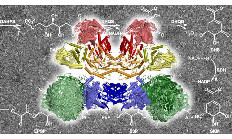 Organized chaos in the enzyme complex—surprising insights and new perspectives