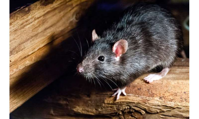 Orthohantavirus—The virus many are googling (but you really don't need to worry about)